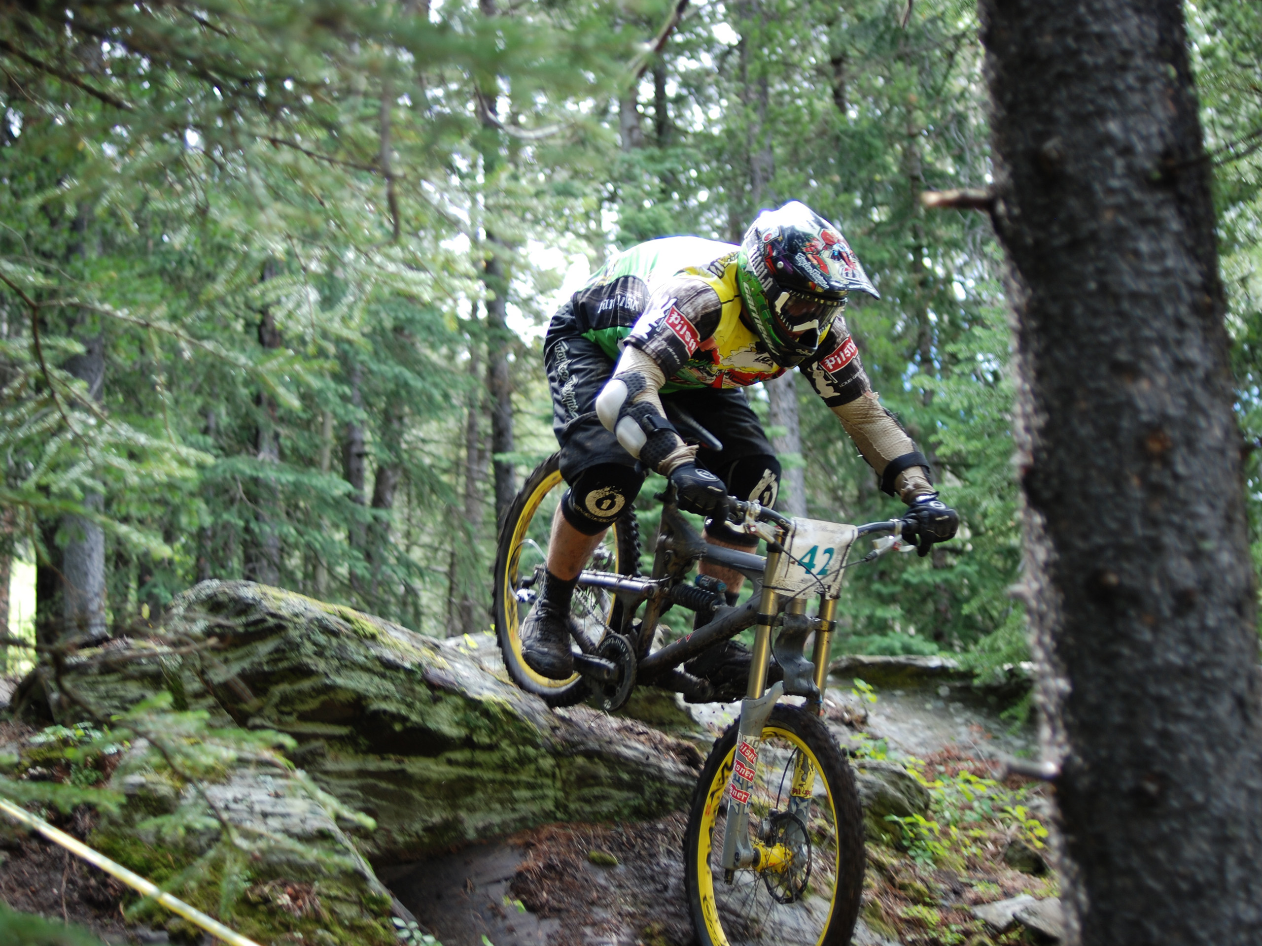 mountain-lion-bike-downhill-1273969