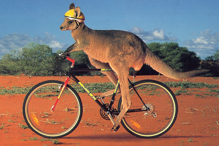 kangaroo on a bike