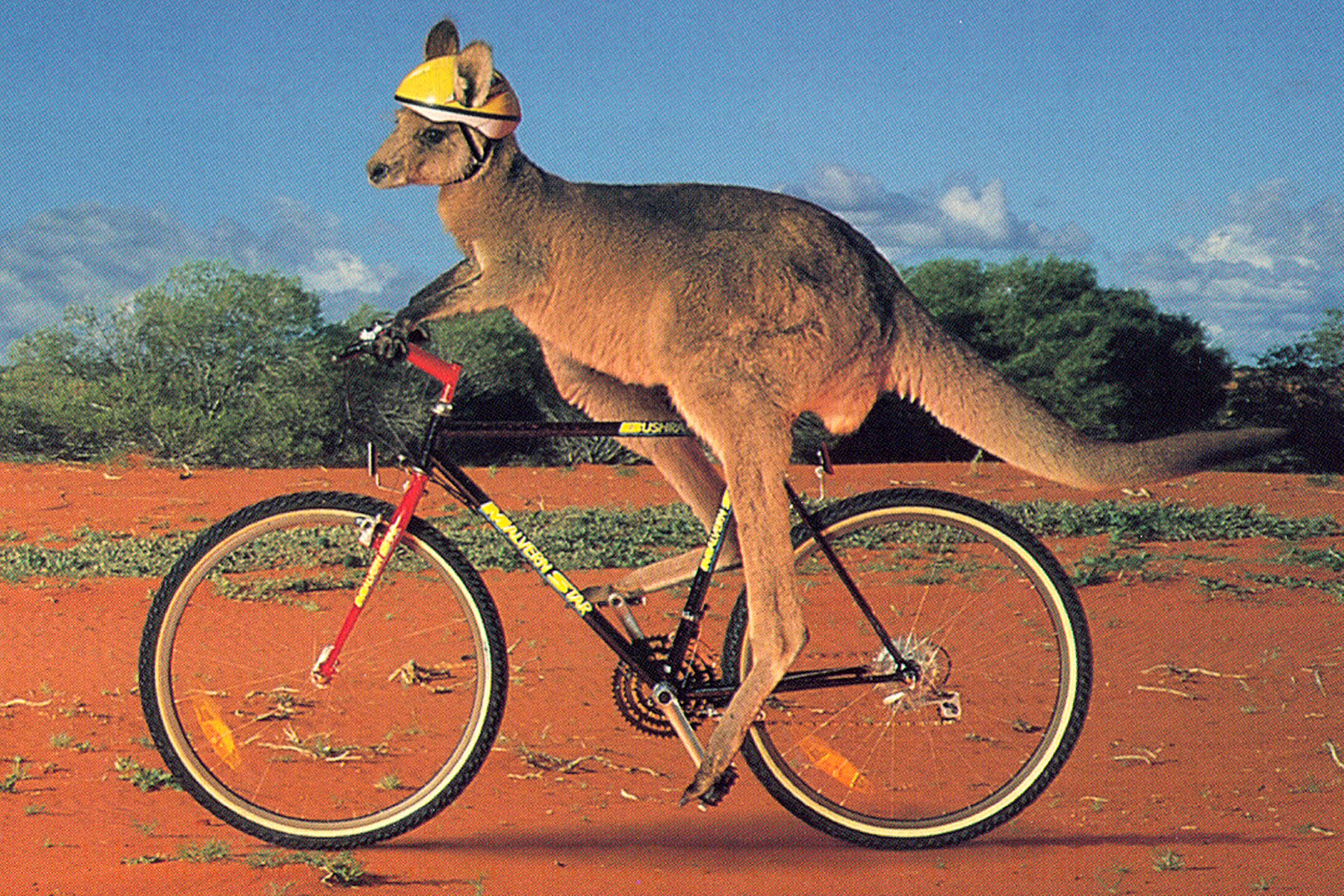 KangarooBicycling