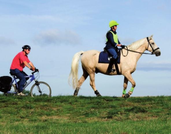 bikehorse